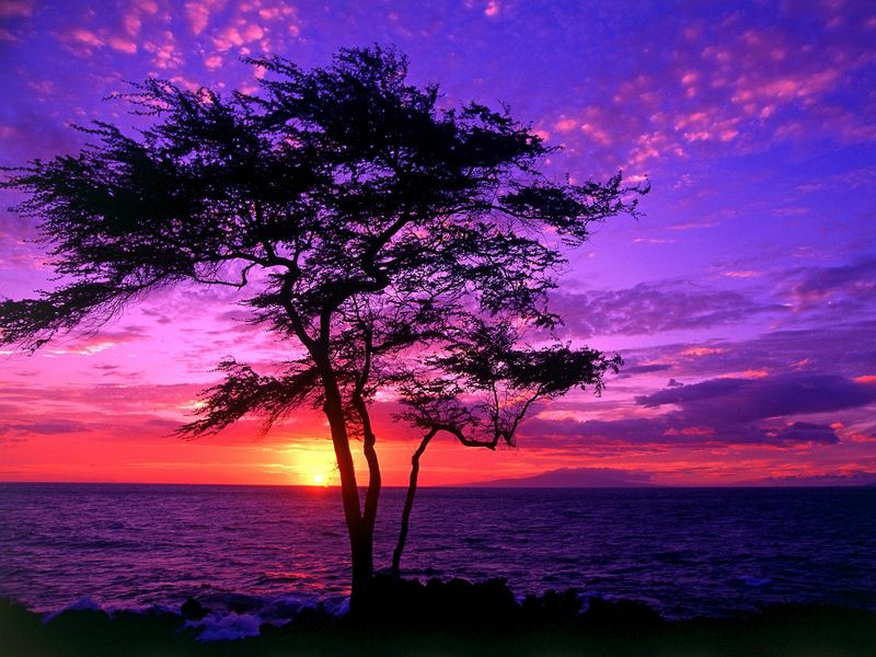 Красивые фото заката солнца - Kiawe Tree, Wailea, Maui, Hawaii