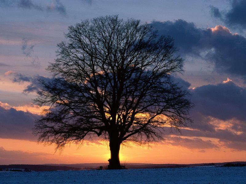 Красивые фото заката солнца - Lone Tree at Sunset