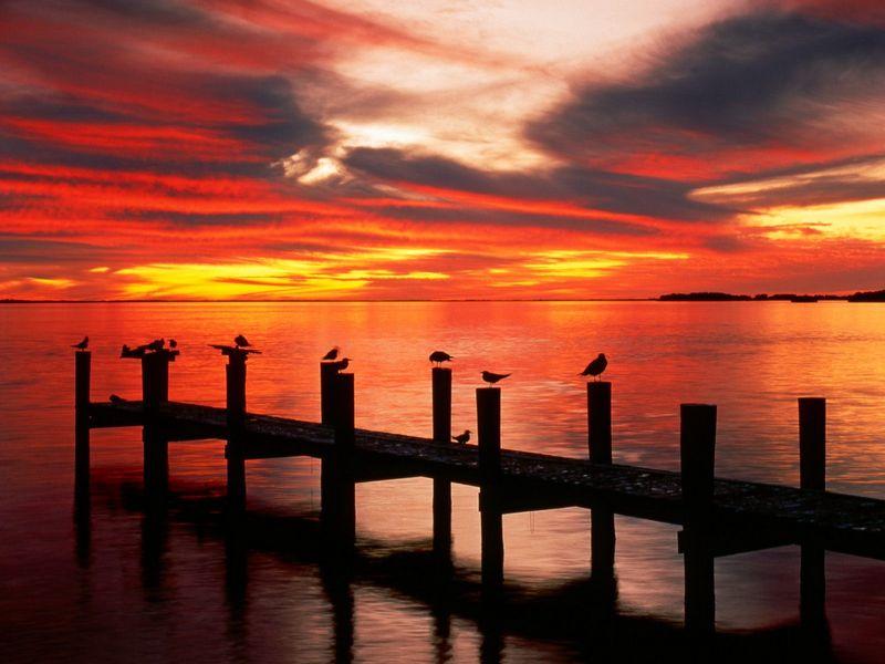 Красивые фото заката солнца - Seagulls at Sunset, Fort Myers, Florida