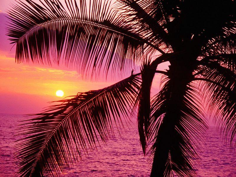 Красивые фото заката солнца - Tropical Setting, Hawaii