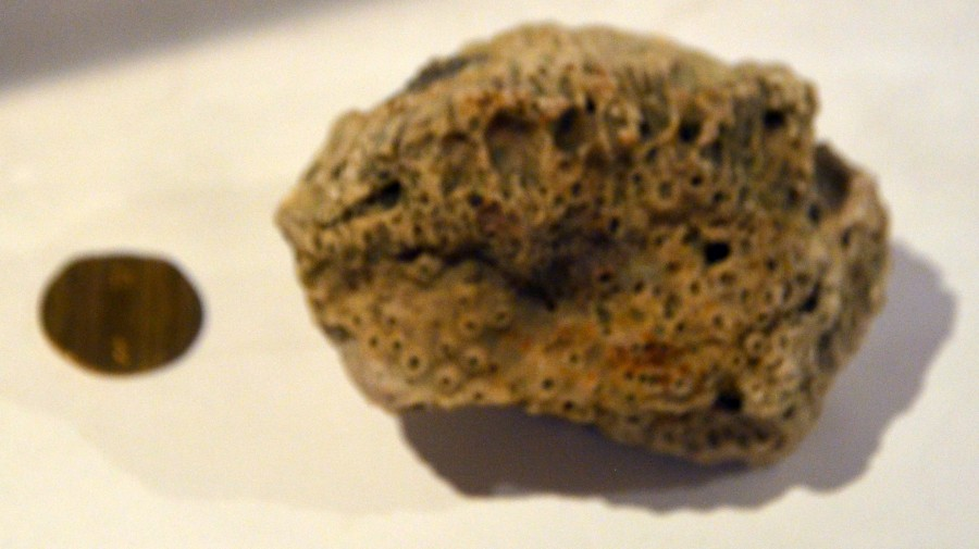 DSC_0053_Крымская каменюка