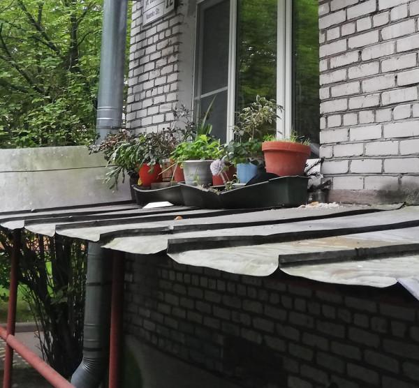 IMG_20190731_170801_просто горшки на крыше_Павловск