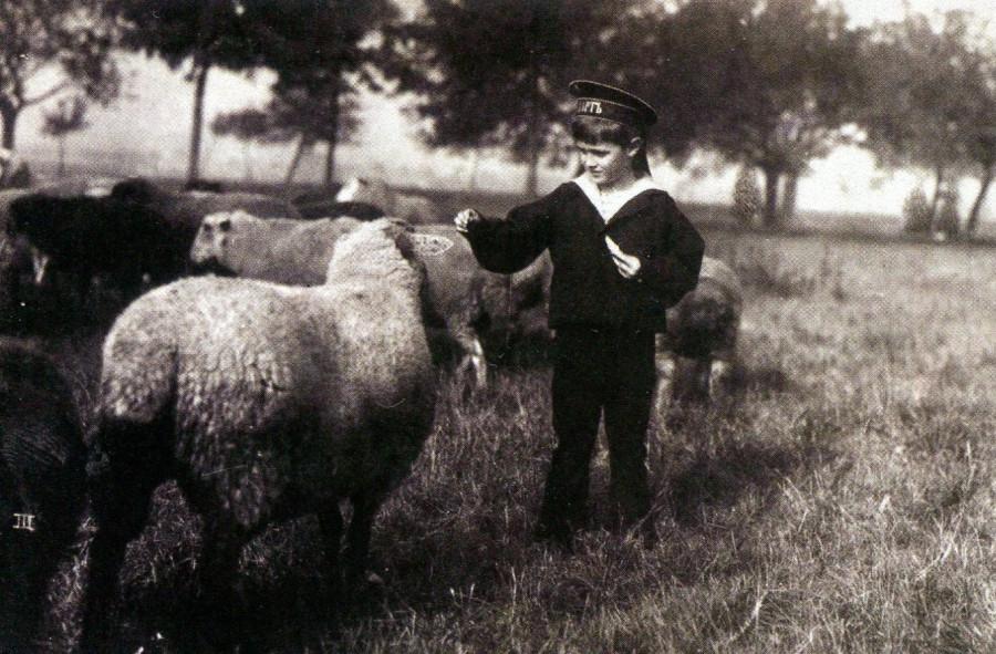Цесаревич Алексей кормит овечек.