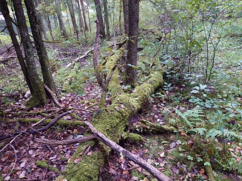 Лес ноги великана 11 сентября 2021 3.jpg