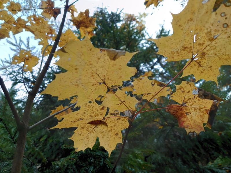 Лес 1 октября 2021 5.jpg