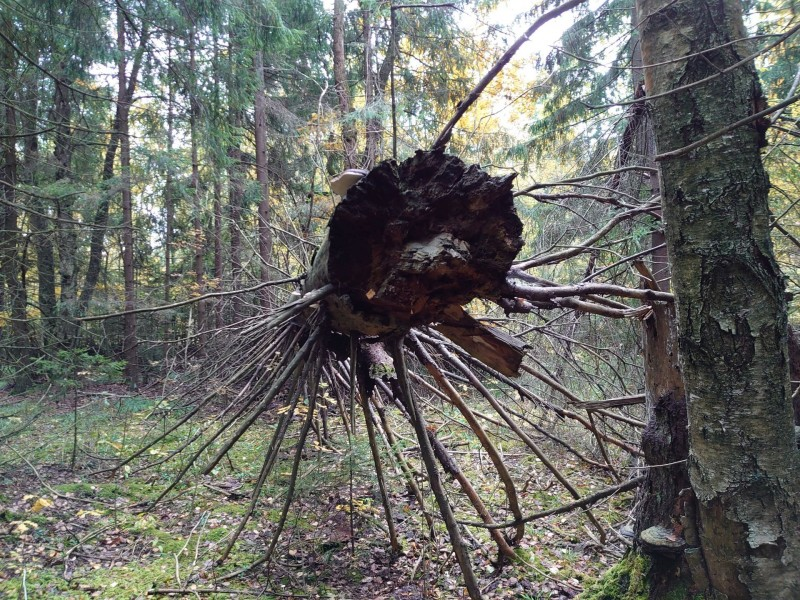 Лес 1 октября 2021 16.jpg