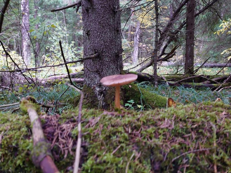 Лес 1 октября 2021 17.jpg
