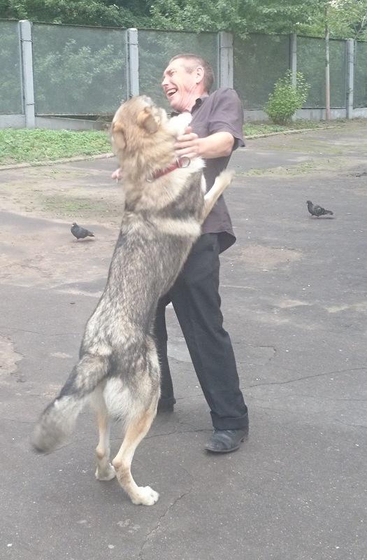 Канис Найда охрана 21 августа 2014 3.jpg