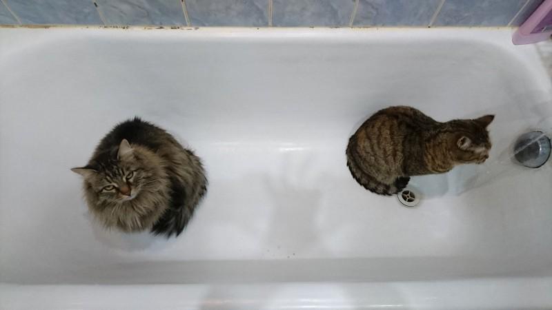 Джойка и Ульси в ванной 1.jpg
