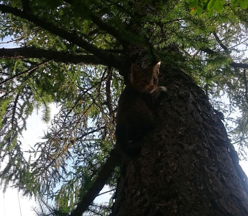 Котенок на дереве 2.jpg