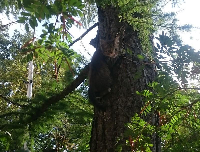 Котенок на дереве 1.jpg