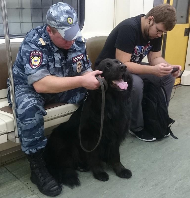 Собака в метро 2.jpg