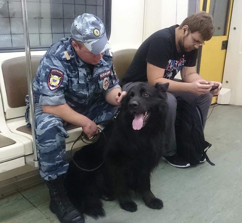 Собака в метро 1.jpg