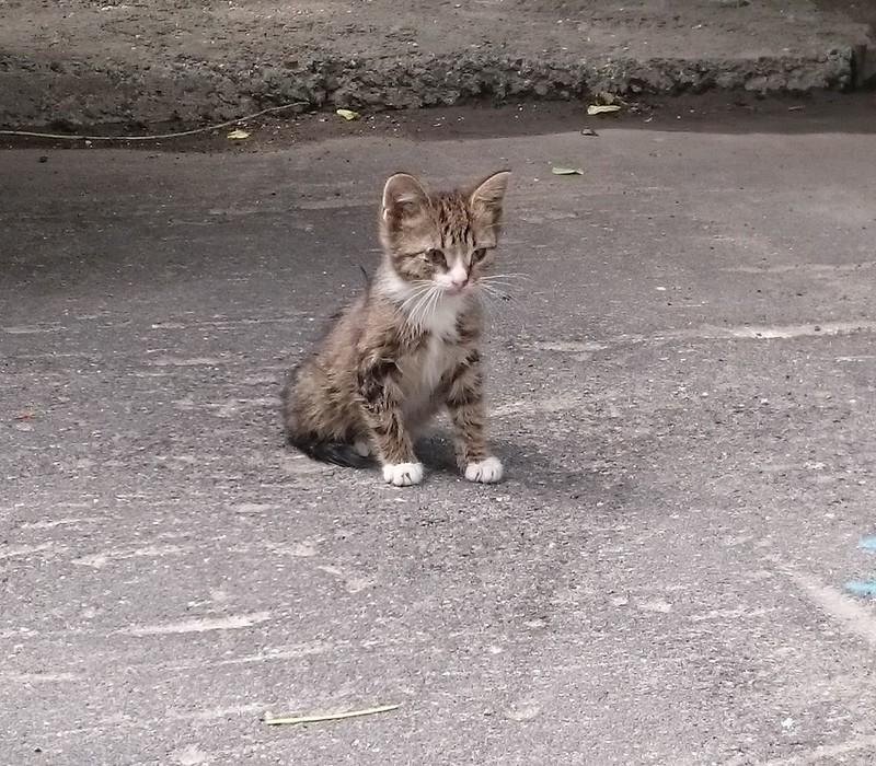 Серый котенок 6.jpg