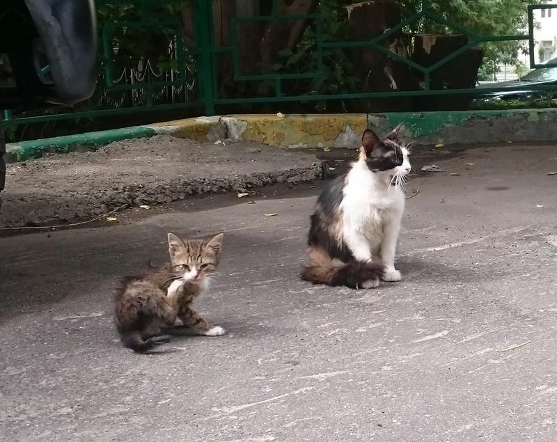 Серый котенок 5.jpg