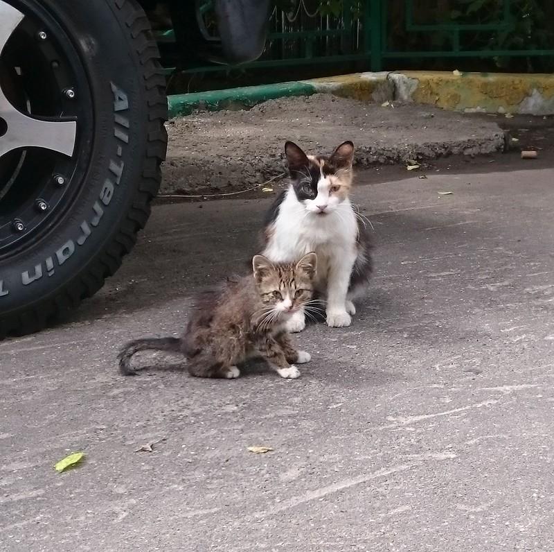 Серый котенок 4.jpg