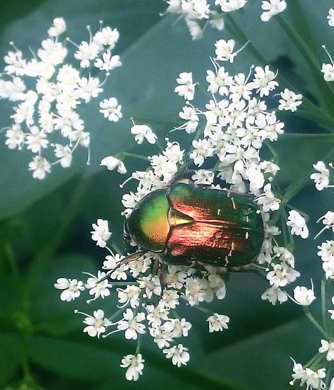 жуки 3.jpg