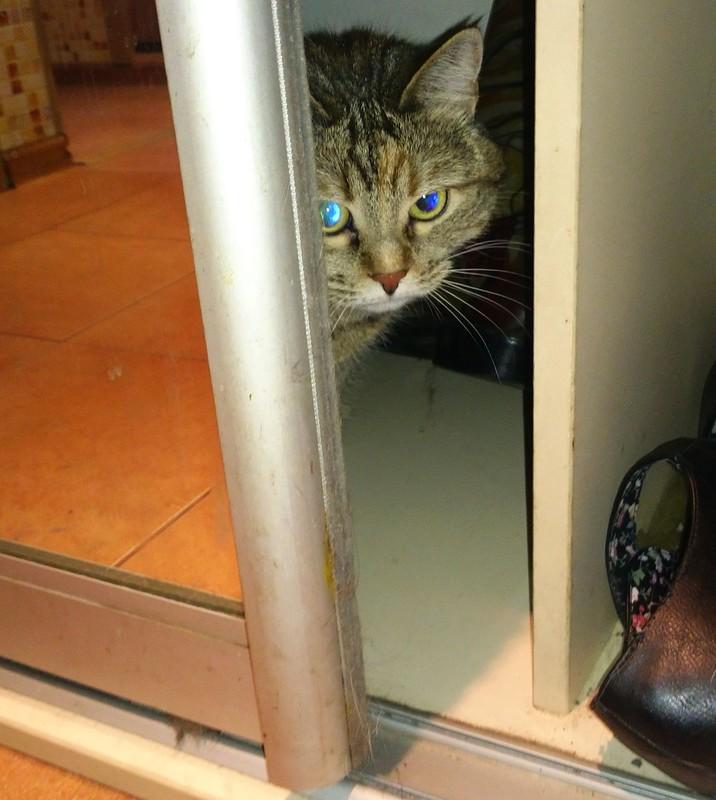 Джойка в шкафу 1.jpg