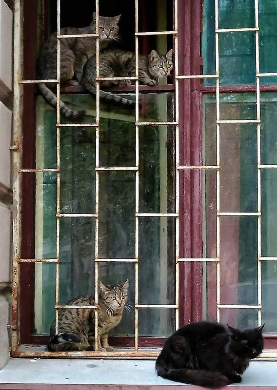 Кошки в окошке 1.JPG