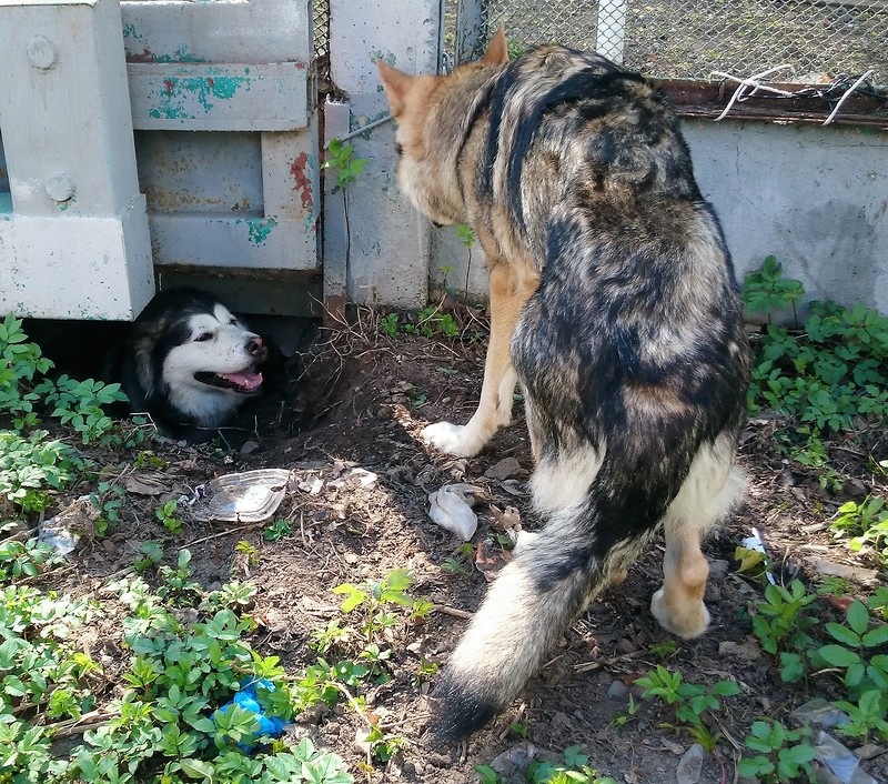 Карма и Канис 30 апреля 2016 7.JPG