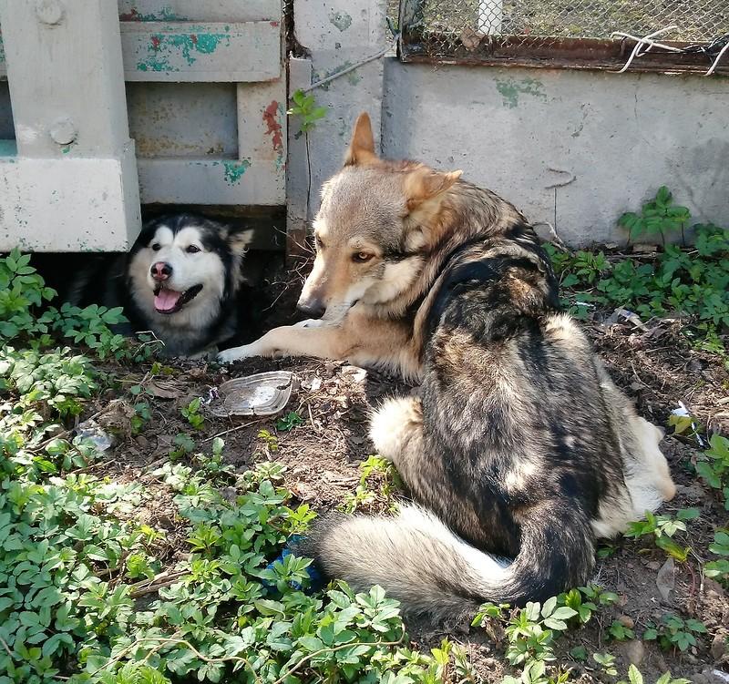 Карма и Канис 30 апреля 2016 11.JPG