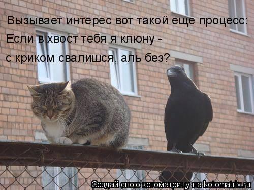 1001015_990416264373155_8392836173244407932_n.jpg
