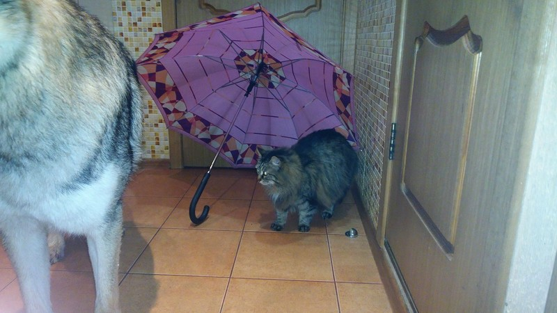 Ульси и зонтик 3.jpg
