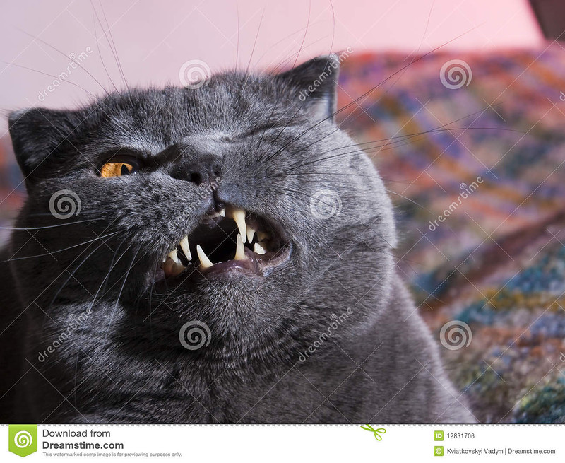 http://www.dreamstime.com/royalty-free-stock-image-fat-cat-image12831706