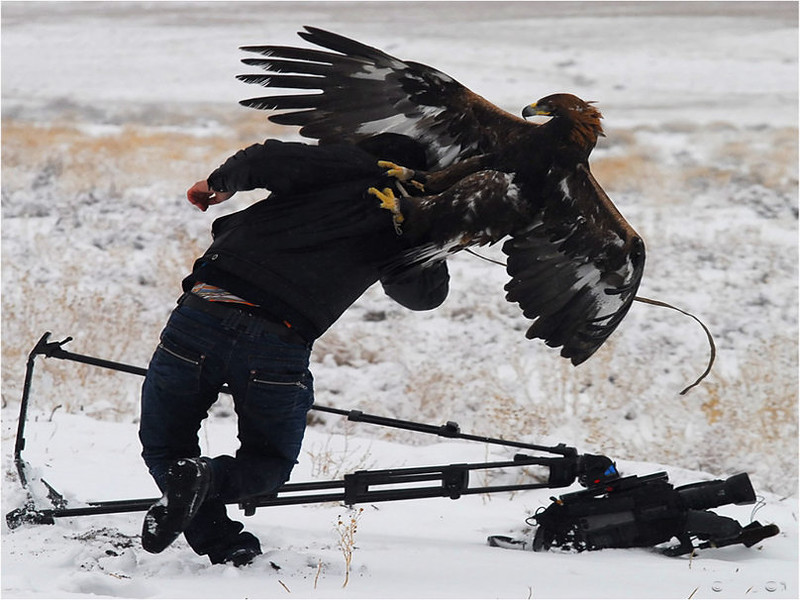 425593__eagle-vs-photographer_p.jpg