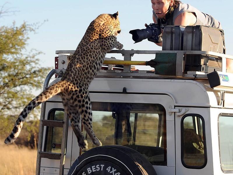 09s23-leopard-318__mngl_20110609ab5x026,nyh_1.indd_3956.jpg