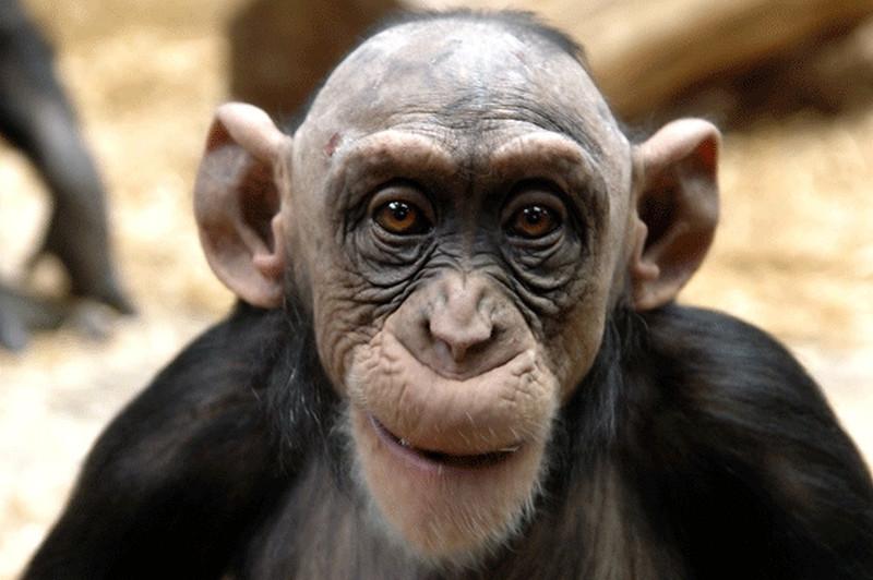 monkey pictures