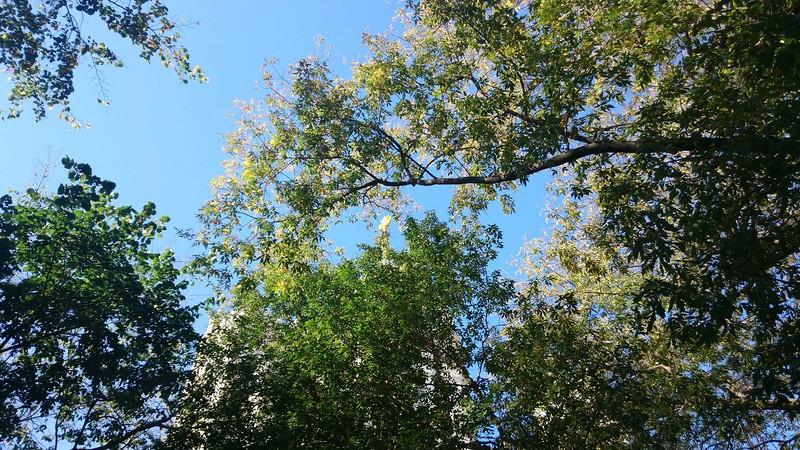 Осень 3.jpg