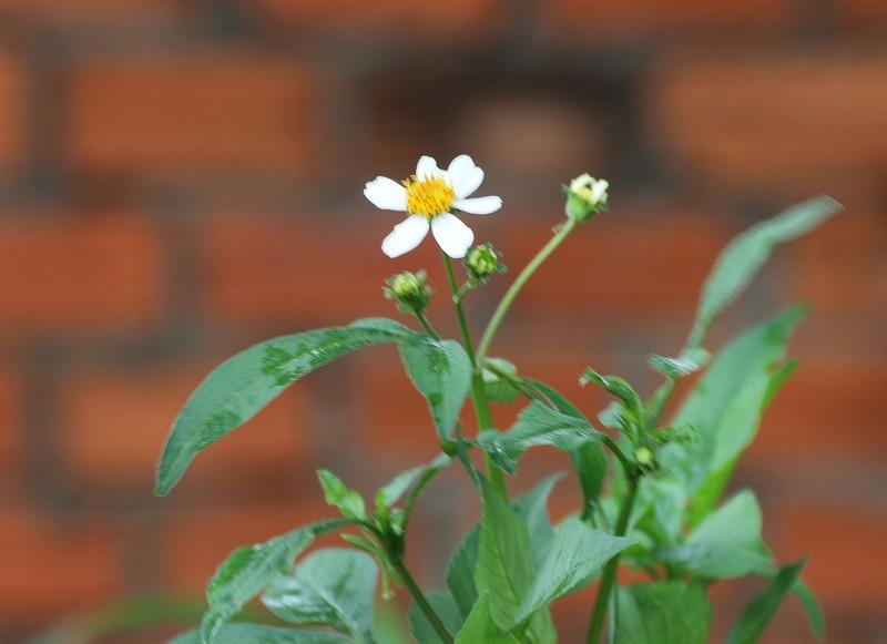цветы 9.jpg