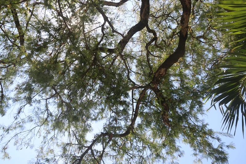 природа 2.jpg