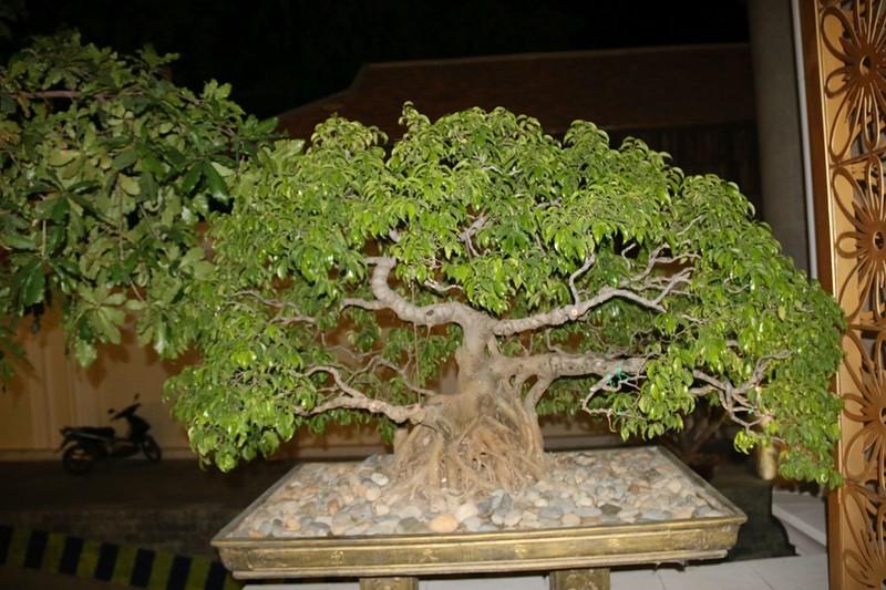 Растения 1.jpg