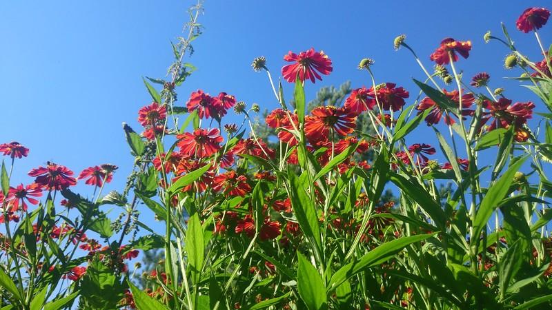 цветы 6.jpg