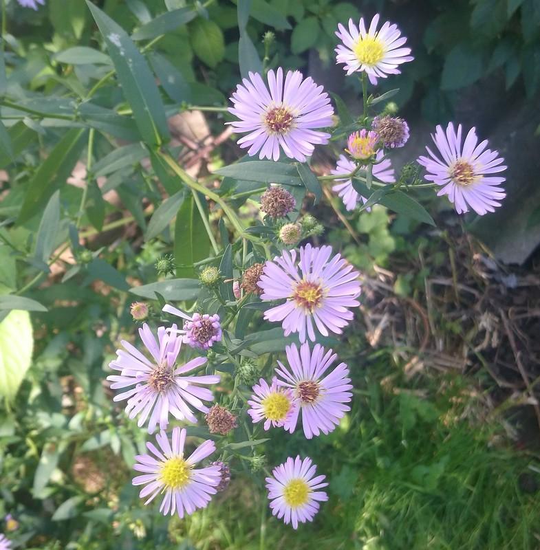 цветы 8.jpg