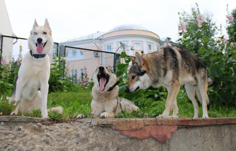 волки 16.jpg