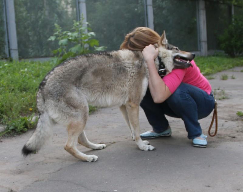 Галя волки 19.jpg