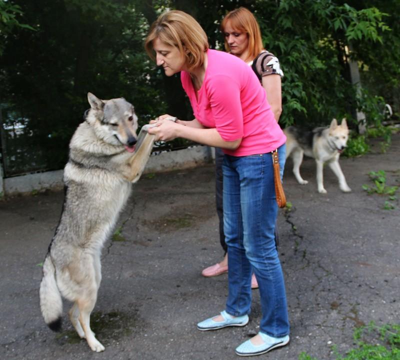 Галя волки 10.jpg