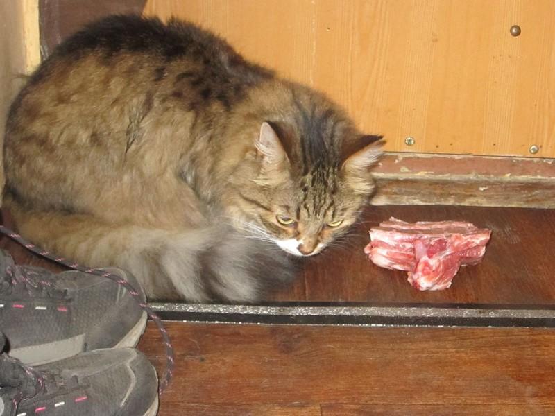 Галин кот 2.jpg