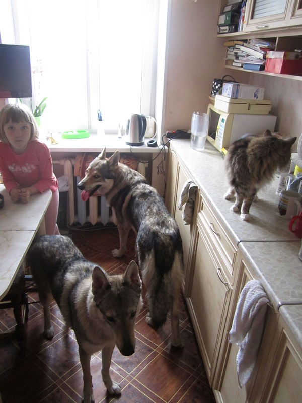 на кухне 1.jpg