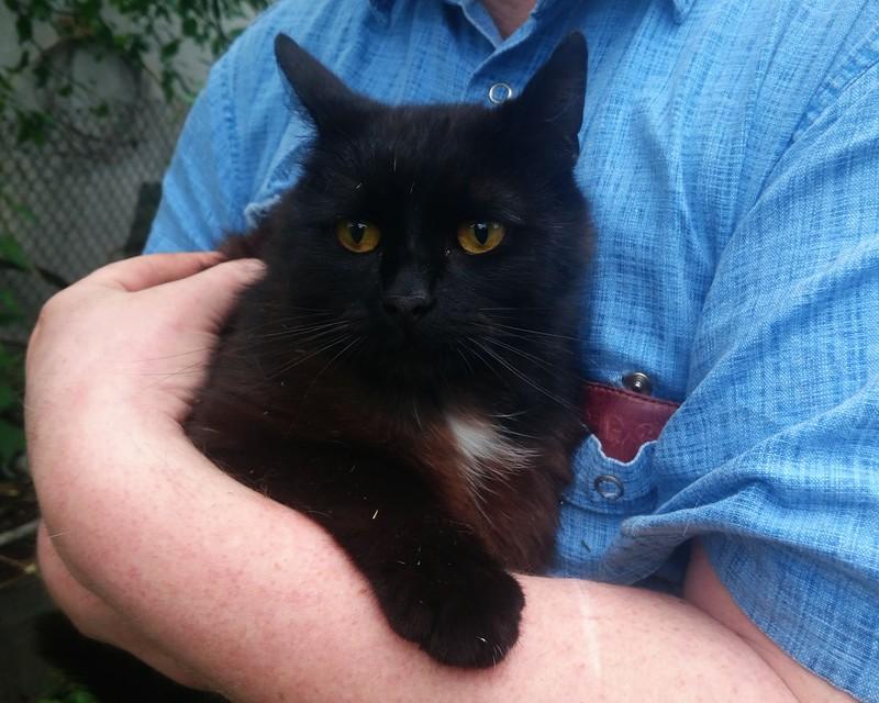 чёрный кот 1.jpg
