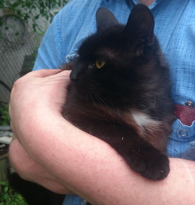 чёрный кот 2.jpg