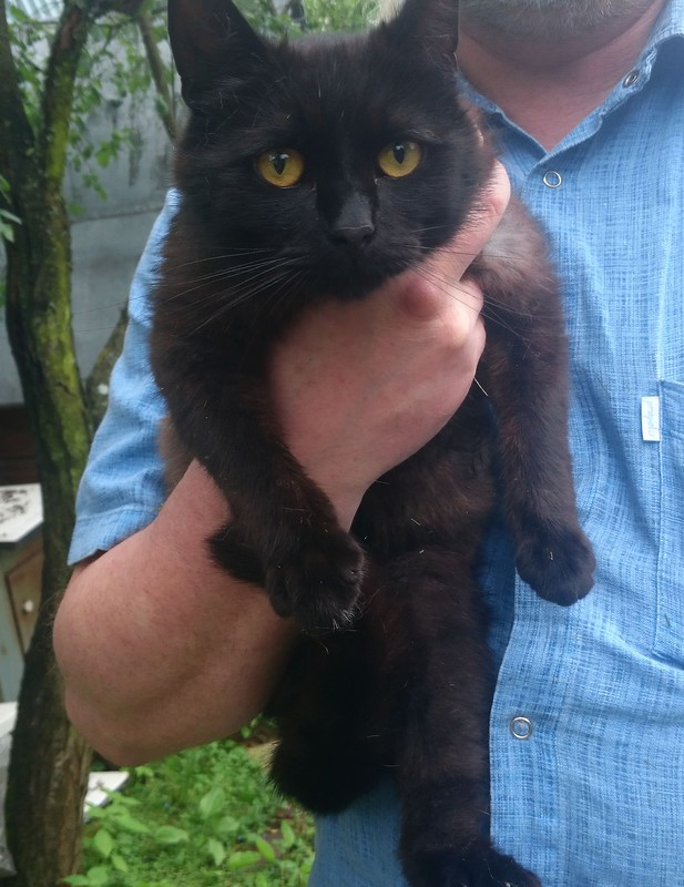 чёрный кот 4.jpg