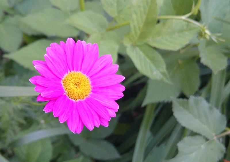 Щербинка июни 2015 10.jpg