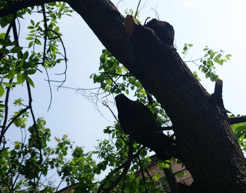 Ворна на дереве 2.jpg