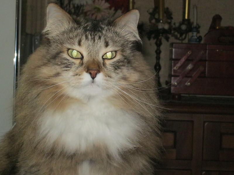 Кошка Мими.JPG