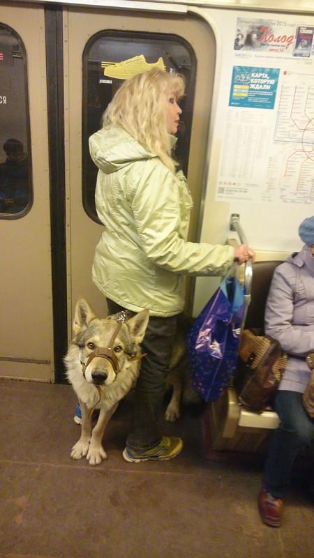 Канис в метро 2.jpg