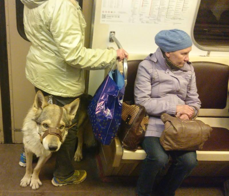 Канис в метро 1.jpg